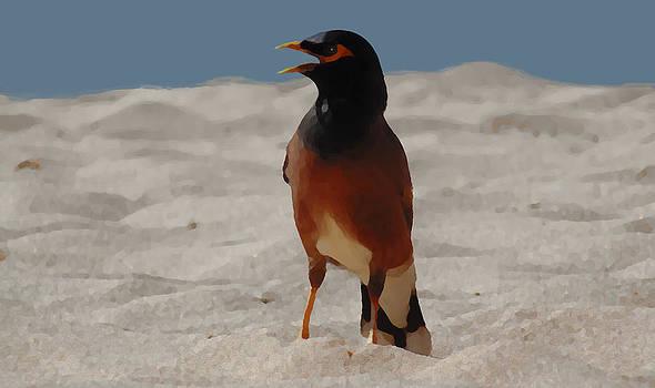Marcello Cicchini - Birdy profile