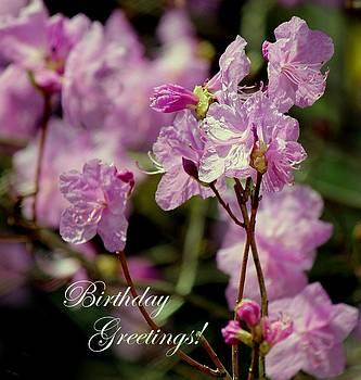 Rosanne Jordan - Birthday Azaleas