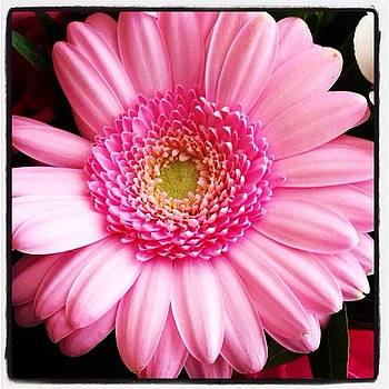 Eve Tamminen - Birthday Flowers🌸💖. #birthday