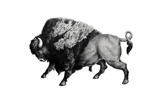 Bison by Alexander M Petersen