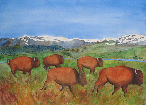 Patricia Beebe - Bison At Yellowstone