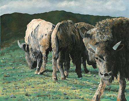 Bison by Jason Morgan
