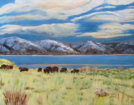 Bison on Antelope Island by Linda Feinberg