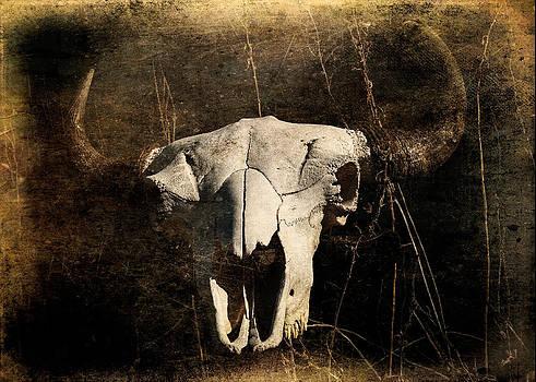 Bison Skull by Jessica Osborne