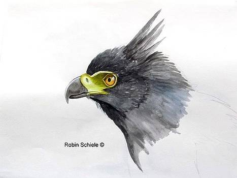 Black-and-chestnut Eagle by Robin Schiele