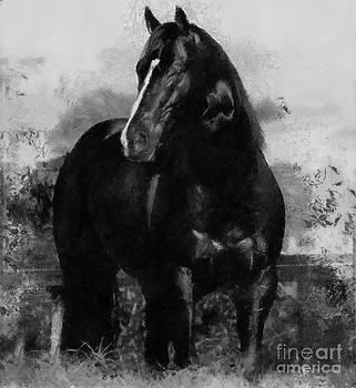 Scott B Bennett - Black and white Beauty
