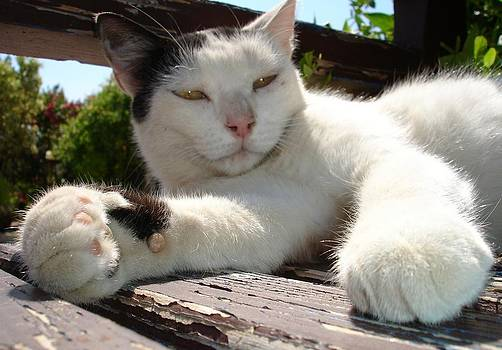 Tracey Harrington-Simpson - Black and White Bicolor Cat Lounging on A Park Bench