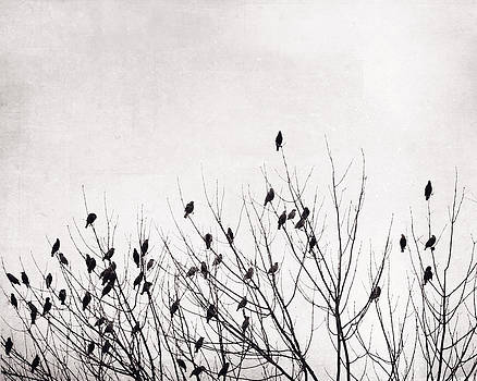 Carolyn Cochrane - Black and White Birds