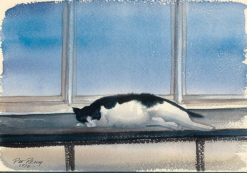 Black and White Cat by Pat Percy