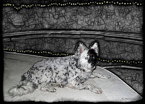 Joan  Minchak - Black and White Dog
