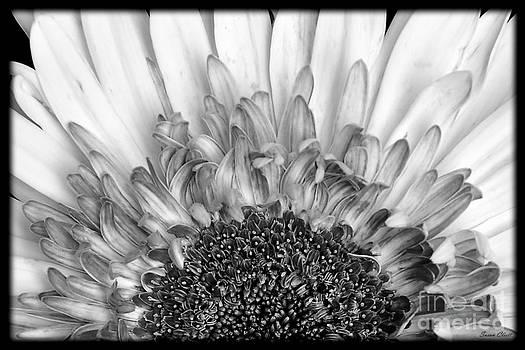 Black and White Flower by Susan Cliett