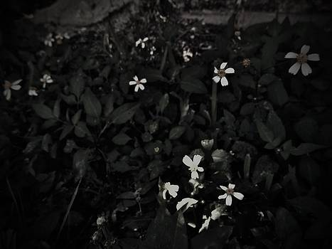 Black and White Flowers by Susan Sidorski