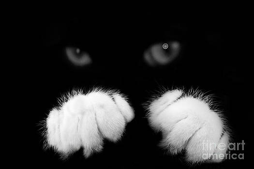 Black and white by Janique Robitaille