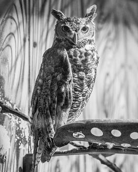 Black and White Owl by Jason Brow