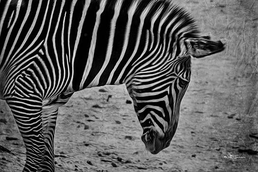 Black and White Stripes by Jeff Swanson