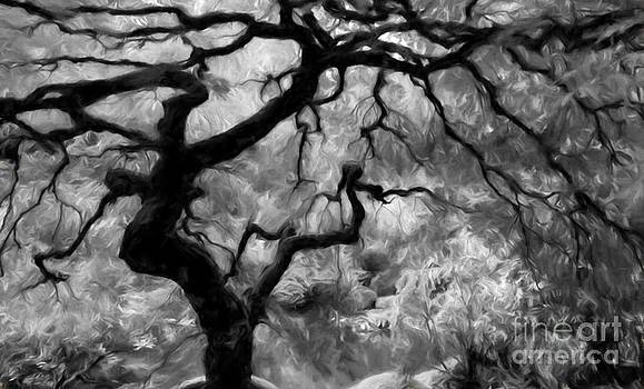 Black and White Tree Art by Heinz G Mielke
