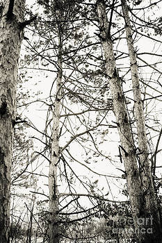 Black And White Trees by Brin Schooley