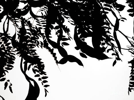 Emily Kelley - Black And White Trees Project 1