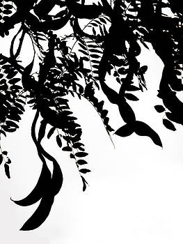 Emily Kelley - Black And White Trees Project 2