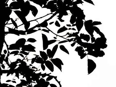 Emily Kelley - Black And White Trees Project 4