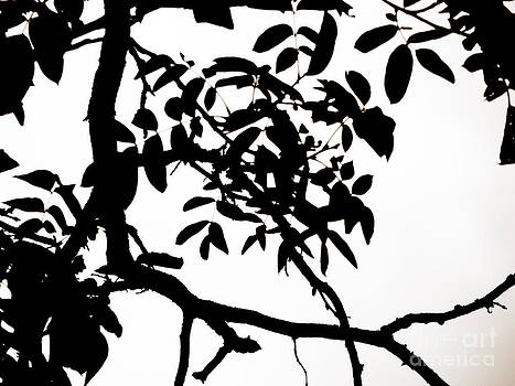 Emily Kelley - Black And White Trees Project 5