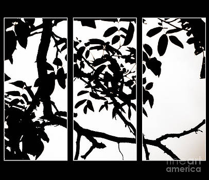 Emily Kelley - Black And White Trees Project Tripycth