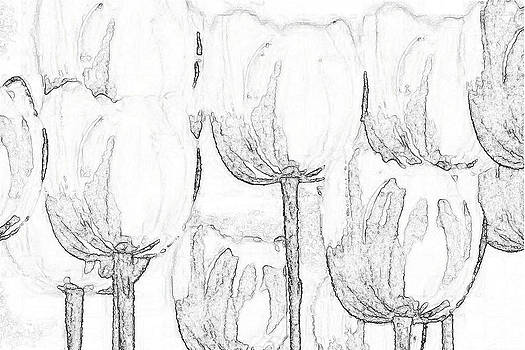 Black and White Tulips by Lisa Purcell