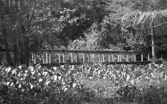 Shere Crossman - Black and White Wooden Bridge and Water Lilies