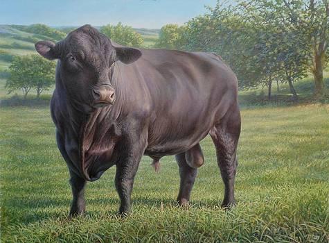 Black Angus Bull 2 by Hans Droog