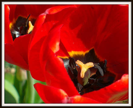 Black Anthers by Heidi Manly