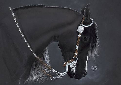 Black Arabian by Heather Gessell