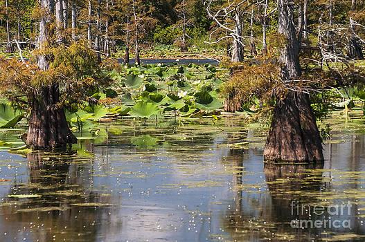 Bob Phillips - Black Bayou Lake View