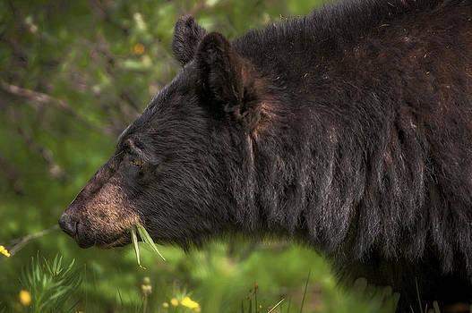 Paul W Sharpe Aka Wizard of Wonders - Black Bear and Buttercups