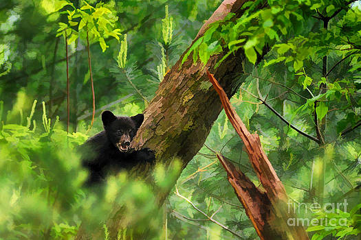 Dan Friend - Black bear cub in tree  - artistic