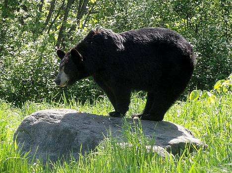 Black Bear Lookout  by Jody Benolken