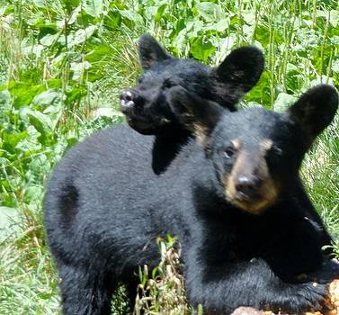 Black Bear Love  by Jody Benolken