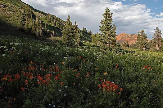 Susan Rovira - Black Bear Pass in Bloom