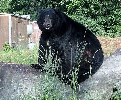 Black Bear Rock by Jody Benolken