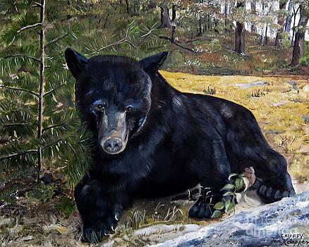 Black Bear - Scruffy - Signed by Artist by Jan Dappen