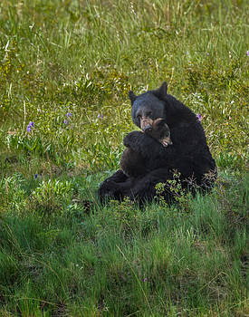 Black bear sow hugging cub by Mark Steven Perry