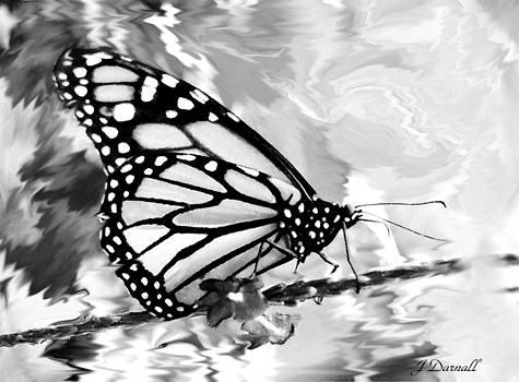 Black Beauty by Jim  Darnall