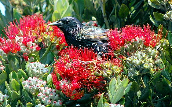 Black Bird in the Red Flowers by AJ  Schibig