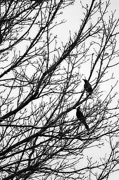Black Birds On Tree Branches by Miss Dawn