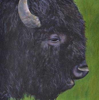 Young Bison by Jane Friday