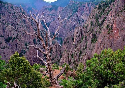 Black Canyon of The Gunnison by Larry Bodinson
