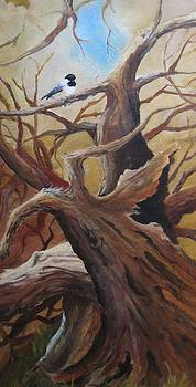 Black cap chickadee by Paula Marsh
