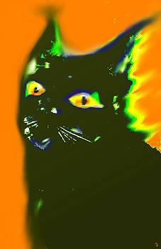 Marcello Cicchini - Black Cat 3