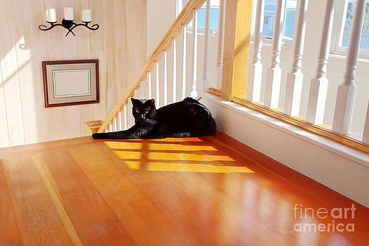 Jo Ann Snover - Black cat by the stairs