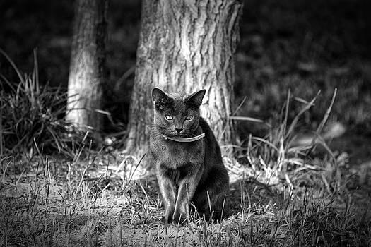 Black Cat by Jerome Lynch