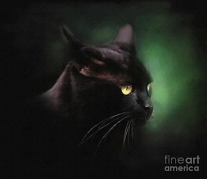 Black Cat by Robert Foster